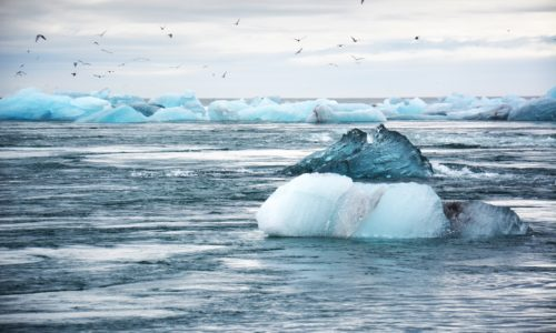 Small icebergs floating in the ocean with seagulls flying above