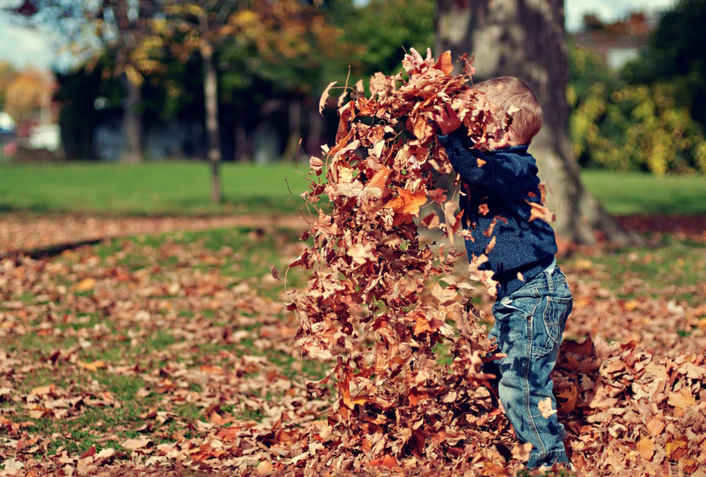 child playing in red autumn leaves in park