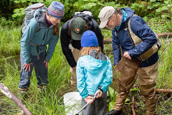 Adults and children looking at wildlife in forest during Bioblitz