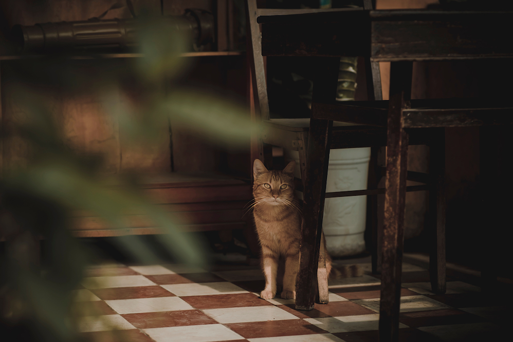 Cat in kitchen on checkered floor