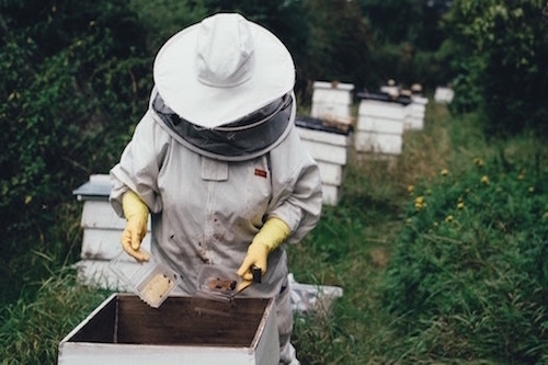 beekeeper inspecting hive in forest