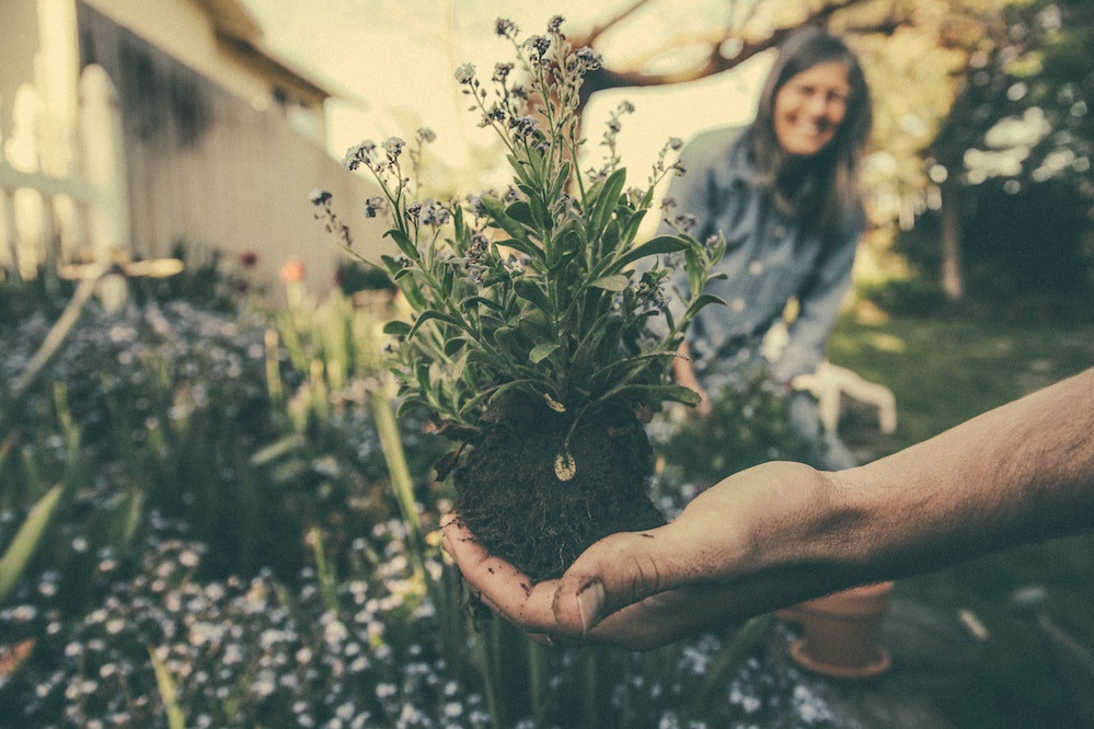 women smiling at hand holding purple flowering plant above a garden plot