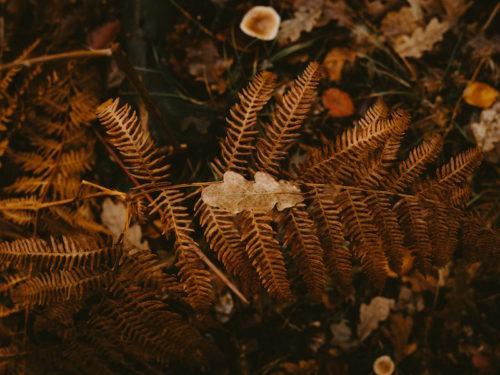 Orange fern, mushrooms and leaves
