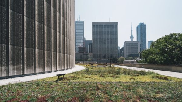 Rooftop garden at Toronto City Hall
