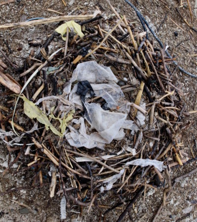 Garbage in birds nest
