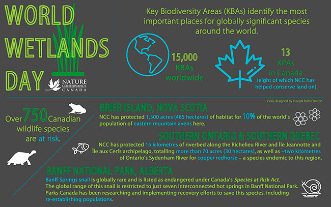 World Wetlands Day infographic