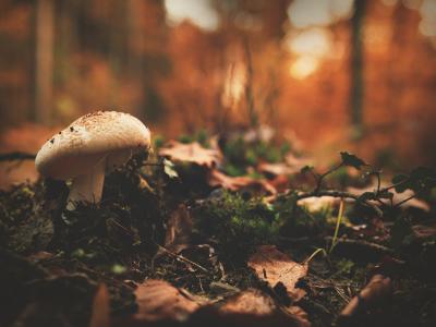 Mushroom growing on log on forest floor