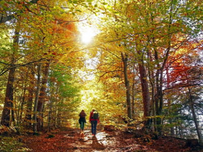 Two people walking in the forest with a dog