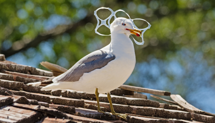 Seagull with plastic six-pack ring