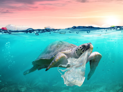 Even Small Acts Can Have a Ripple Effect: Tackling Plastic Pollution