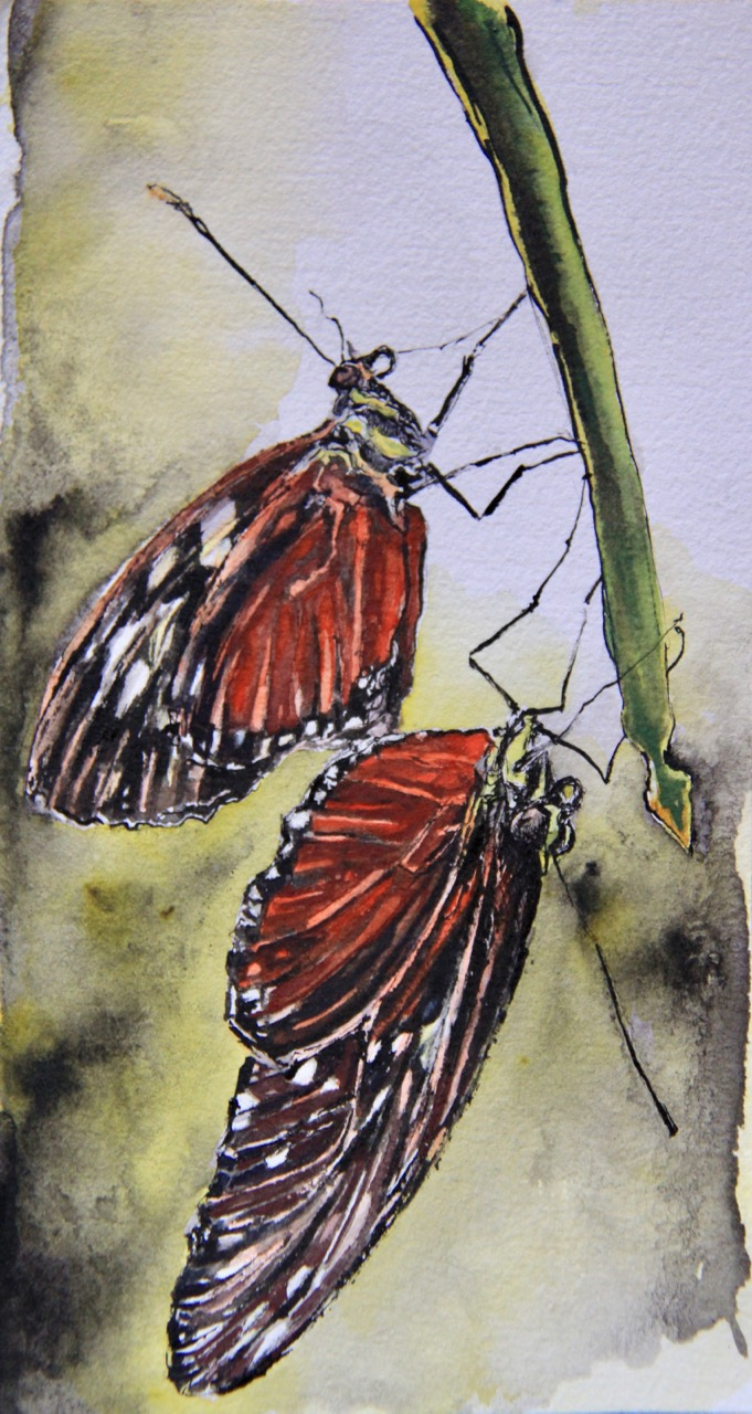 Painting of two butterflies on plant stem