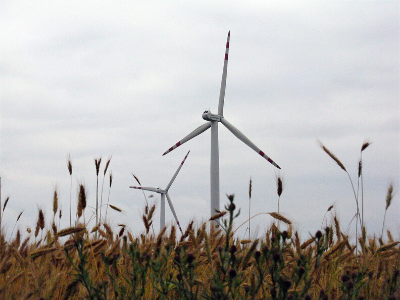 Wind turbine in field of wheat