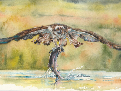 Osprey Hunting - watercolour - Leanne Cadden