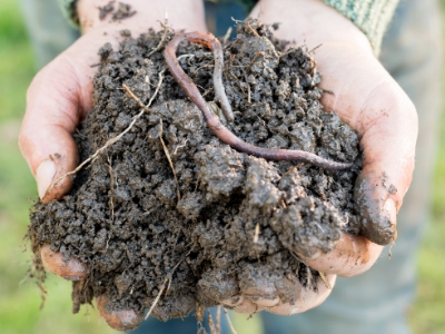Person holding worm in dirt