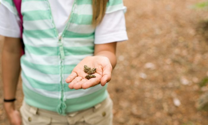 Girl holding small frogs in her hand