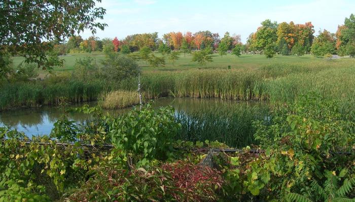 Macoun marsh with pond and wetland plants