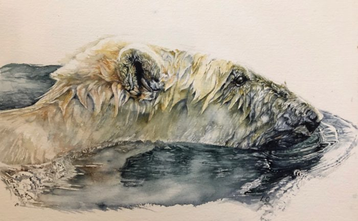 Watercolour painting of polar bear