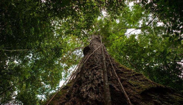 Tree trunk in Amazon rainforest