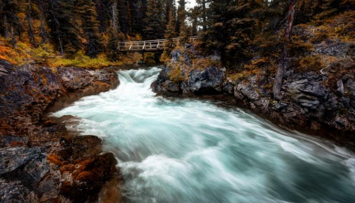 River running through forest