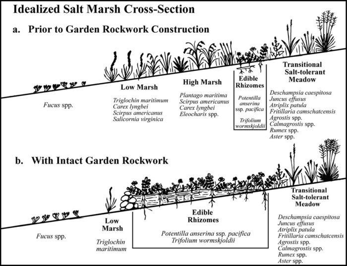 Salt-marsh cross section diagram