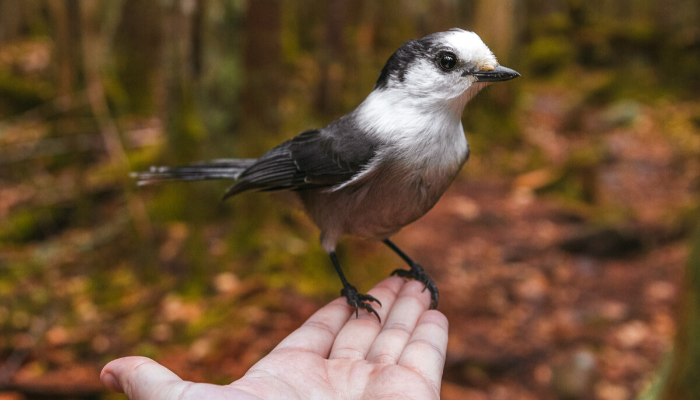 White and brown bird perched on person's hand in woods