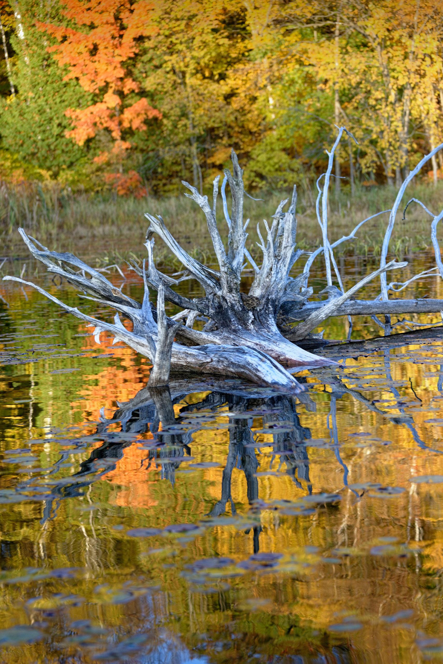 Wood in wetland