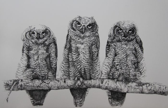 Baby horned owl ink drawing