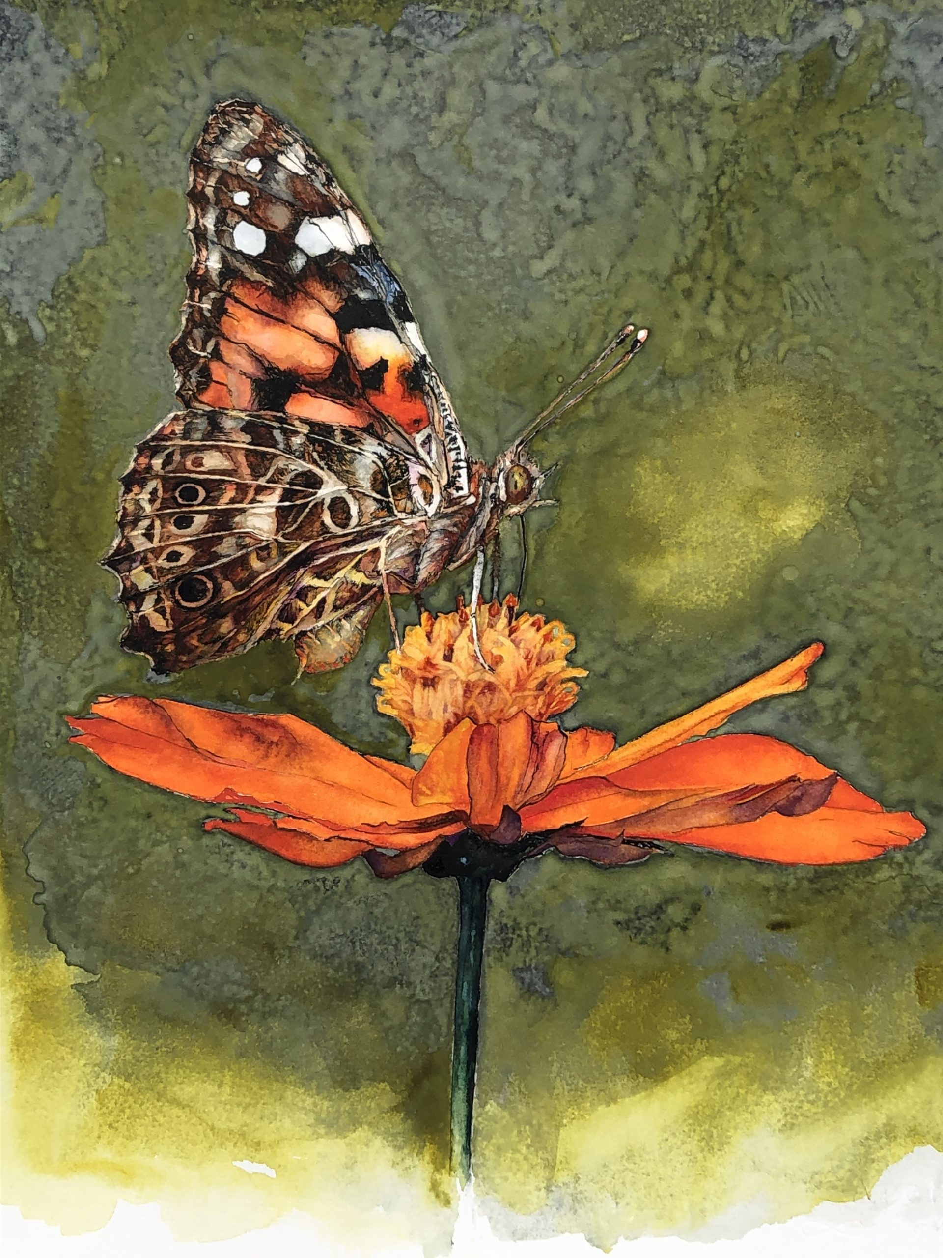 Butterfly on orange flower illustration