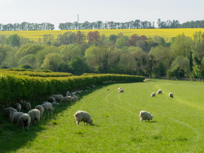 Small farmer's fields can reduce biodiversity loss and increase wild plants, birds, beetles and bats