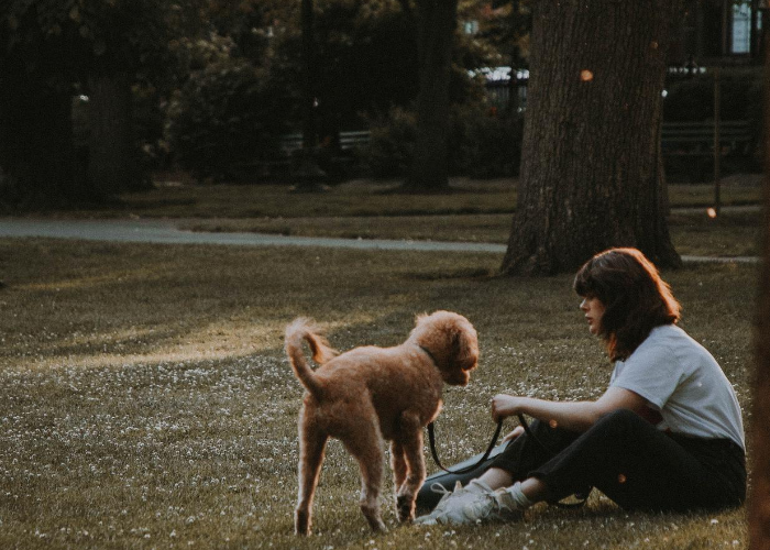 Dog and woman in park