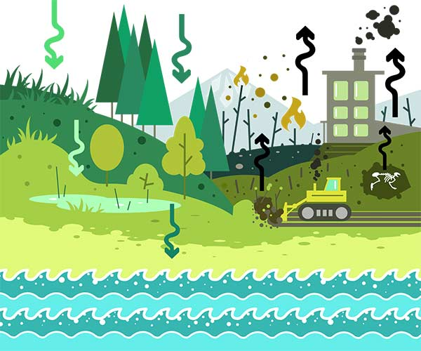 The carbon storage cycle illustration