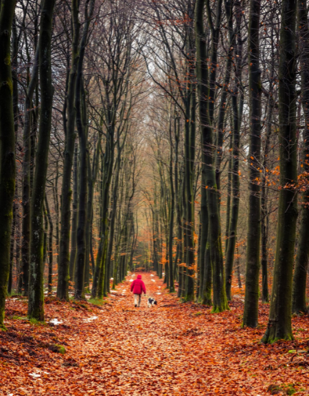 Person in red jacket in forest