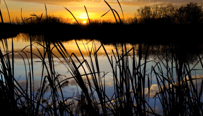 Sunset over marsh with bulrushes