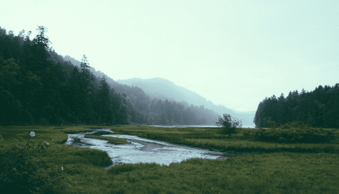 Estuary at Goldstream Provincial Park with trees and flowers