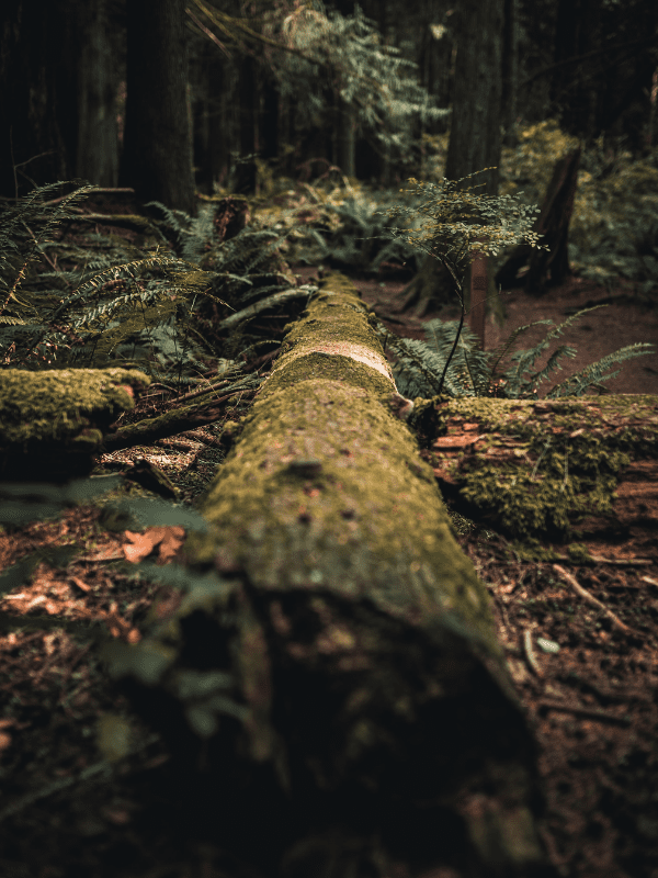 Fallen logs in forests make great snake habitat