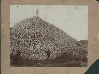 Men standing with pile of buffalo skulls, Michigan Carbon Works, Rougeville Mich., 1892