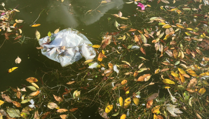 Plastic bag floating in pond with leaves and flowers