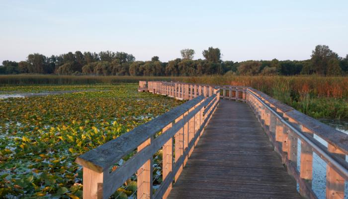 Point Pelee National Park walkway over wetland