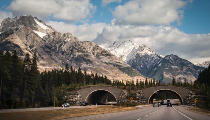 Banff National Park wildlife overpass