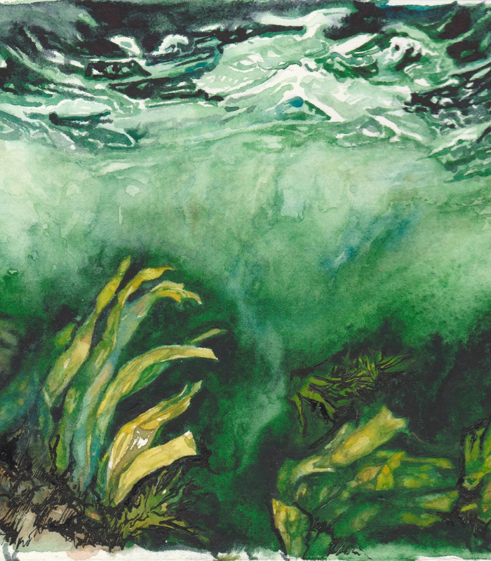 Watercolour painting of ocean floor by Leanne Cadden