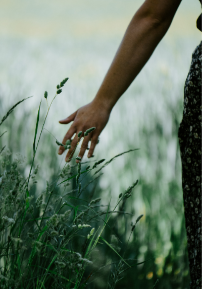 Woman running hands through grasses in nature