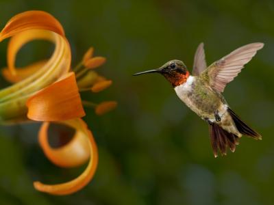5 ways to support native pollinators in your backyard garden