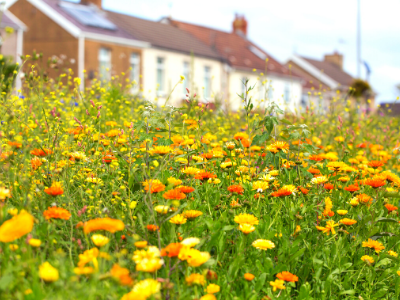 Wildflower boulevards in front of houses UK