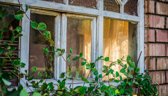 Rustic window with ivy and bricks