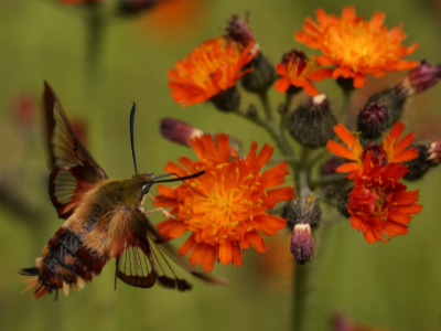 5 Ways Insects Make our World a Better Place