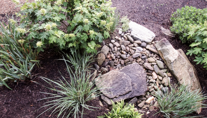 Rain garden with plants, soil, rocks and stones