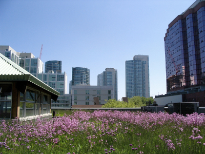 Pink flowers on green roof
