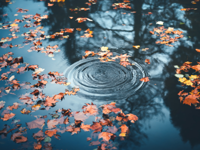 Rain drop in pond with fall leaves