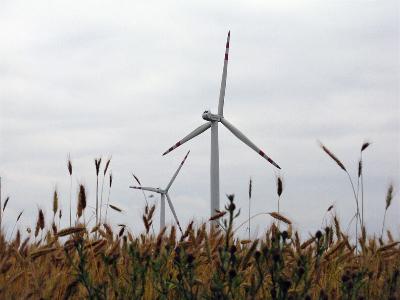 Wind turbine in field of wheat