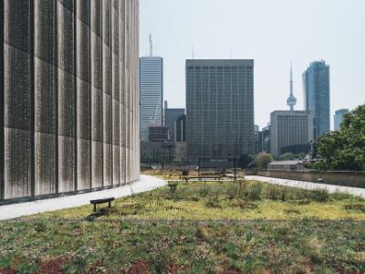 Toronto City Hall green roof